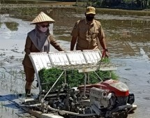 Bupati Luwu Utara, Indah Putri Indriani melakukan tanam padi (Doc: Kementan)