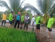 Pertanian Kalimantan barat