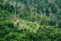 Ilustrasi Pengelolaan Hutan (Photo by Republika)
