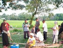 Petani Riau siap membasmi hama ulat grayak