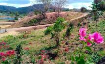 Kebun Bunga Bougainville Lengkapi Kawasan The Mandalika NTB