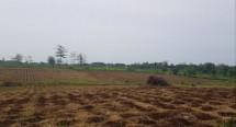 Lahan yang akan ditanami padi