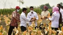 Menteri Pertanian Syahrul Yasin Limpo ditemani Dirjen Tanaman Pangan Suwandi memantau perkebunan Jagung