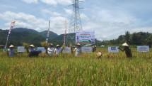 Peringati Hari Pangan Sedunia, PPI Lakukan Panen Raya Lewat Agro Solution